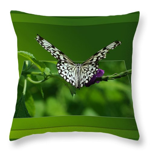 Test Throw Pillow featuring the photograph Butterfly White 16 By 20 by Thomas Woolworth
