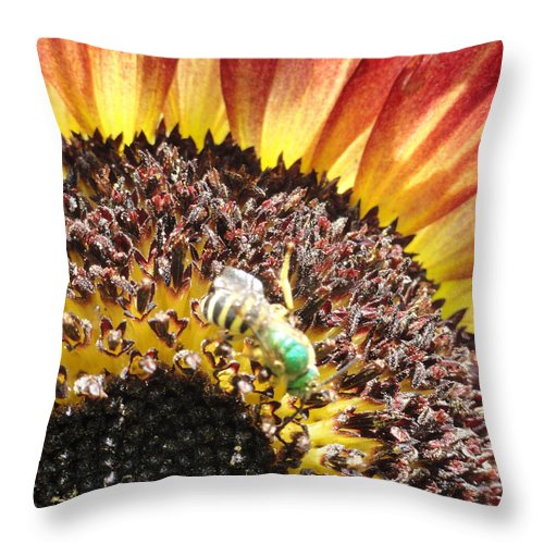 Bandon Beach Throw Pillow featuring the photograph Bzzzz by Trish Hale