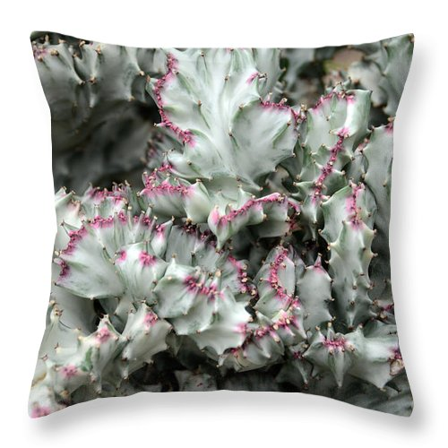 Cactus Throw Pillow featuring the photograph Cactus 58 by Cassie Marie Photography