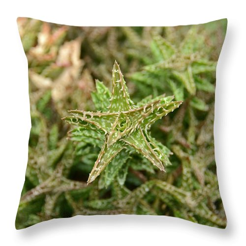 Cactus Throw Pillow featuring the photograph Cactus 59 by Cassie Marie Photography