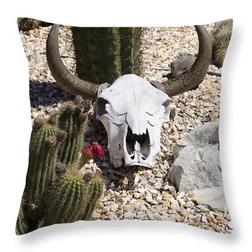 Cactus Throw Pillow featuring the photograph Cactus And Cow Skull by Jim And Emily Bush