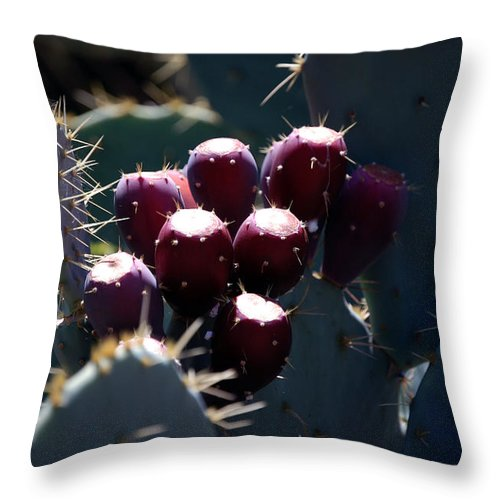 Kelly Rader Throw Pillow featuring the photograph Cactus Bud by Kelly Rader