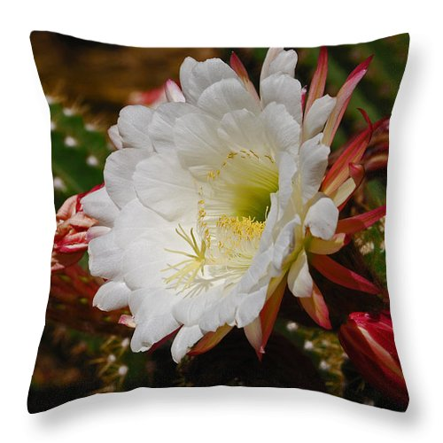 Cactus Throw Pillow featuring the photograph Cactus Flower by Betsy Aguirre