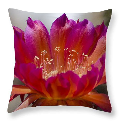 Cactus Throw Pillow featuring the photograph Cactus Flower by Jim And Emily Bush