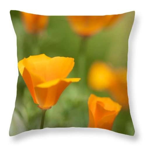 California Poppies Throw Pillow featuring the photograph Cal Poppies by Brooke Roby