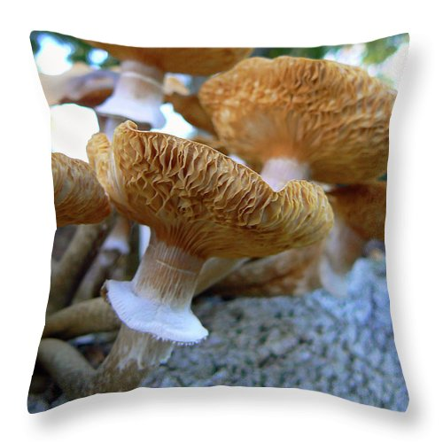 Mushroom Throw Pillow featuring the photograph California Dreaming by Pamela Patch
