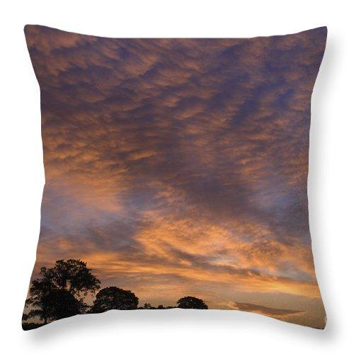 Sandra Bronstein Throw Pillow featuring the photograph California Oaks And Sunrise by Sandra Bronstein