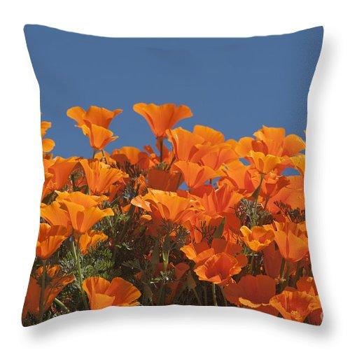 Sandra Bronstein Throw Pillow featuring the photograph California Poppies by Sandra Bronstein