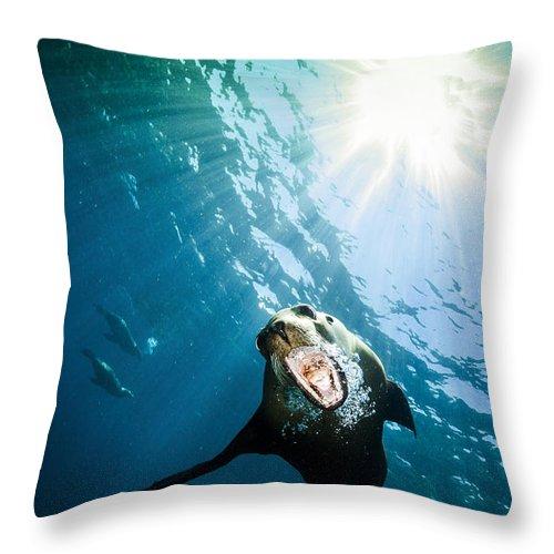 California Sea Lion Throw Pillow featuring the photograph California Sea Lion, La Paz, Mexico by Todd Winner