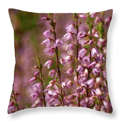 Jouko Lehto Throw Pillow featuring the photograph Calluna Vulgaris 2 by Jouko Lehto
