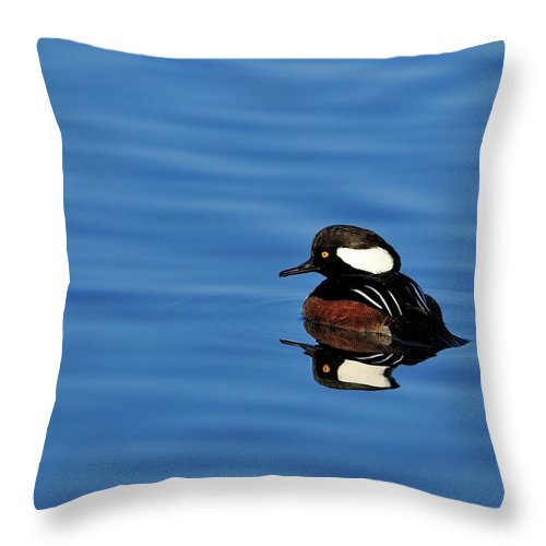 Hooded Throw Pillow featuring the photograph Calm Reflection by Bill Dodsworth