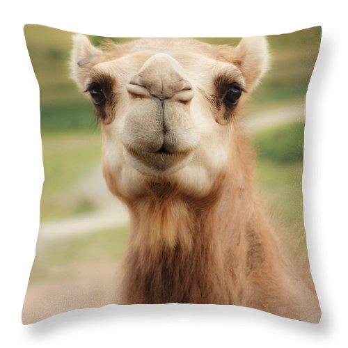 Camel Throw Pillow featuring the photograph Camel Cameo by Michael Clubb