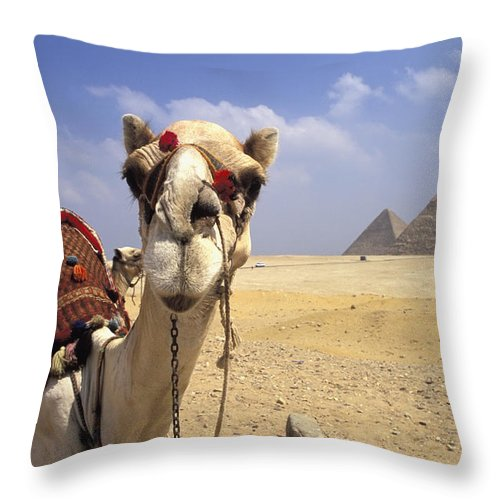 Animal Head Throw Pillow featuring the photograph Camel In Giza Egypt by Axiom Photographic