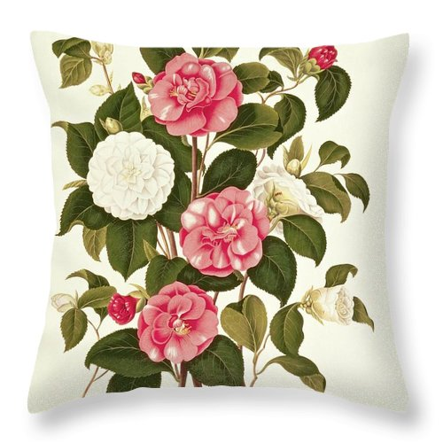 Flower Throw Pillow featuring the painting Camellia by English School