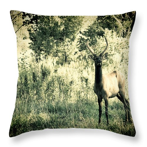 Elk Throw Pillow featuring the photograph Camouflage Elk by Sheri Bartoszek