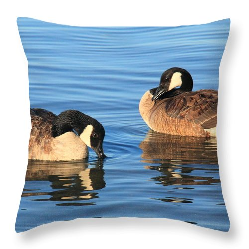 Canada Geese Throw Pillow featuring the photograph Canada Geese  by Roupen Baker
