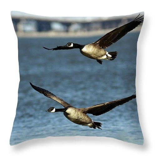 Canada Geese Coming In For A Landing Throw Pillow featuring the photograph Canada Geese Coming In For A Landing by Inspired Nature Photography Fine Art Photography