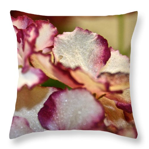 African Violet Throw Pillow featuring the photograph Candy Stripes by Susan Herber