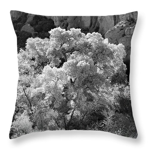 Landscape Throw Pillow featuring the photograph Canyon Treasure by Phyllis Denton