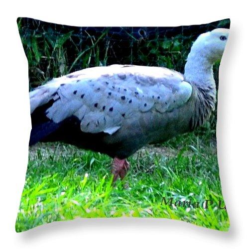 Goose Throw Pillow featuring the photograph Cape Barren Goose by Maria Urso