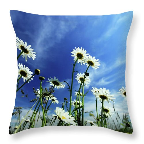 Daisy Throw Pillow featuring the photograph Cape Cod Summer by Rick Berk