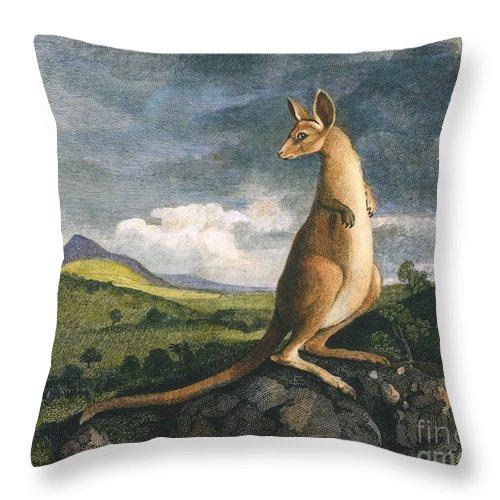 1773 Throw Pillow featuring the photograph Captain Cook: Kangaroo, 1773 by Granger