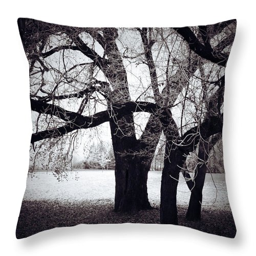 Elm Framed Prints Framed Prints Throw Pillow featuring the photograph Captions Cradle by The Artist Project