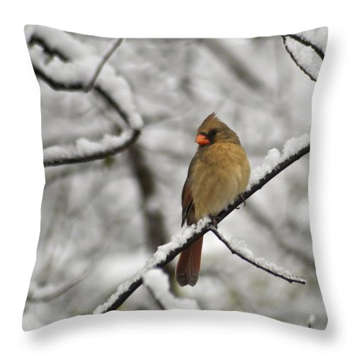 Adult Throw Pillow featuring the photograph Cardinal Female 3652 by Michael Peychich