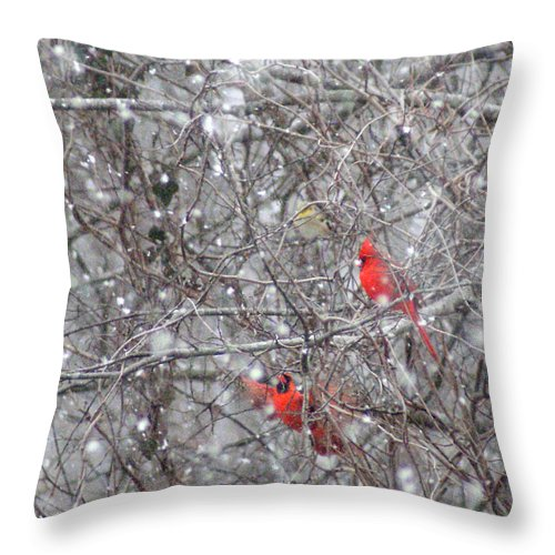 Birds Throw Pillow featuring the photograph Cardinals In The Snow by Rick Friedle