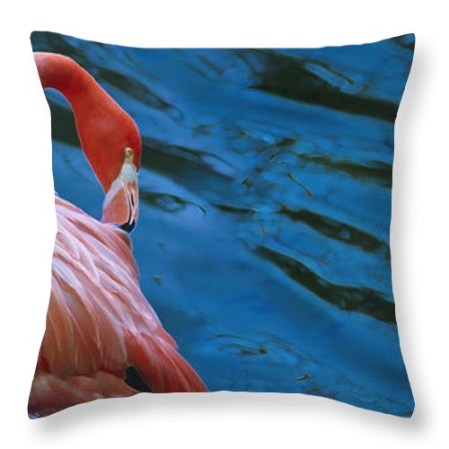 Flamingo Throw Pillow featuring the photograph Caribbean Flamingo by Luciano Comba