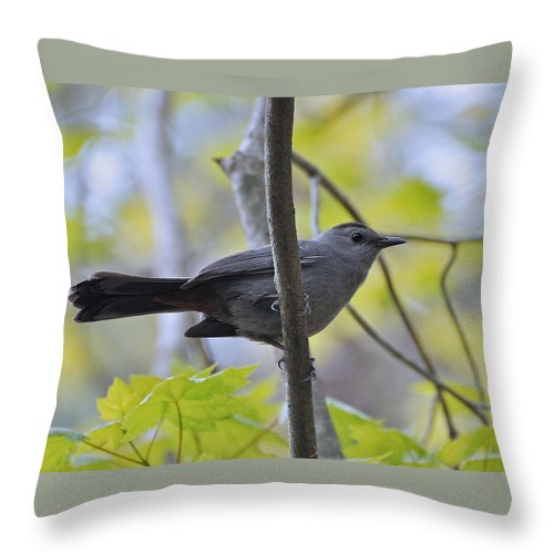 Cat Bird Throw Pillow featuring the photograph Cat Bird by Mary Anne Williams