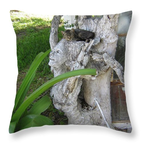 Hebron Chism Throw Pillow featuring the photograph Cat Nap by Hebron Chism