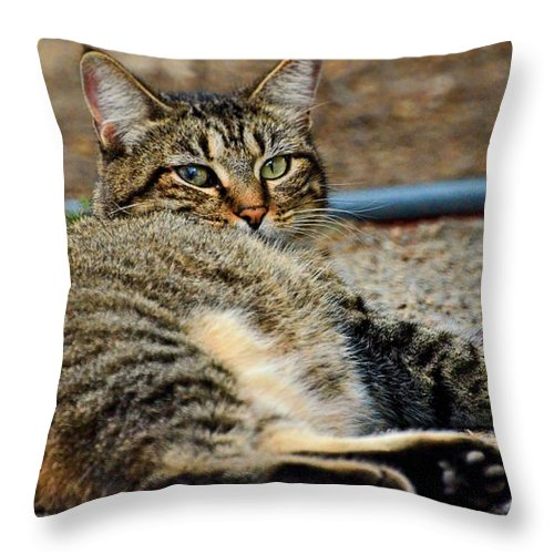 Nature Throw Pillow featuring the photograph Cat Nap Interuption by Debbie Portwood