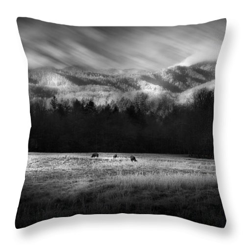 Cataloochee Throw Pillow featuring the photograph Cataloochee Elk Grazing The Fields by Gray Artus