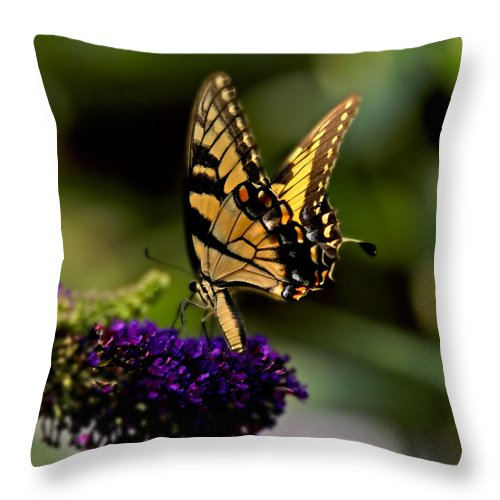 Monarch Butterfly Throw Pillow featuring the photograph Catch Me If You Can by J Cheyenne Howell