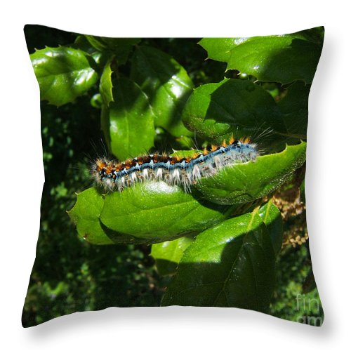 Artoffoxvox Throw Pillow featuring the photograph Caterpillar Photograph by Kristen Fox