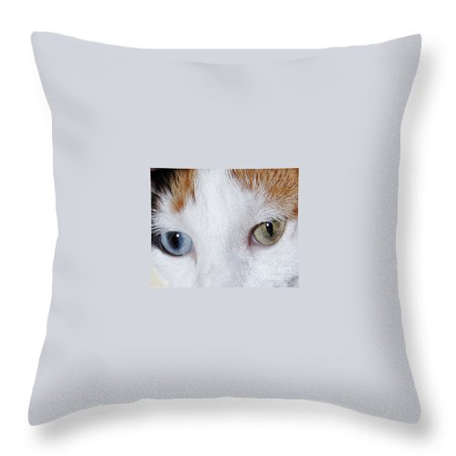 Cat Throw Pillow featuring the photograph Cats Eyes Multi Colored by Lloyd Alexander