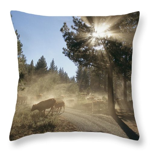 North America Throw Pillow featuring the photograph Cattle Cross A Gravel Road On A Fall by Michael S. Lewis