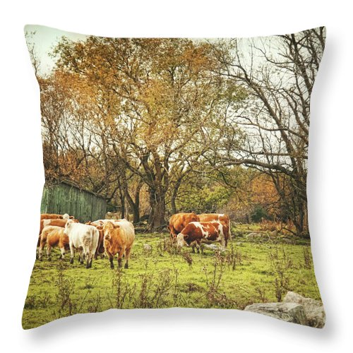 Agricultural Throw Pillow featuring the photograph Cattle Gazing On Remaining Green Grass by Sandra Cunningham