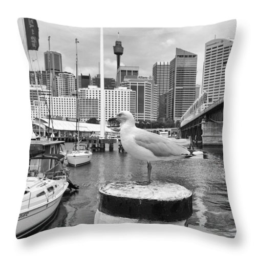 Seagull Throw Pillow featuring the photograph Center Of Attention by Douglas Barnard