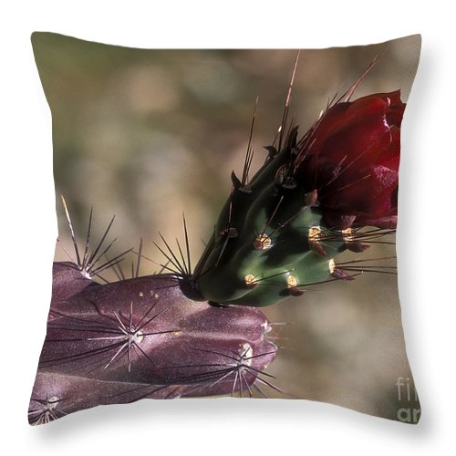 Sandra Bronstein Throw Pillow featuring the photograph Chain Cholla Cactus Bloom by Sandra Bronstein