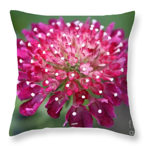 Flower Throw Pillow featuring the photograph Charlottenburg Palace Beauty by Carol Groenen
