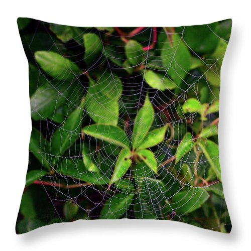 Web Throw Pillow featuring the photograph Charlotte's Web by Rick Berk