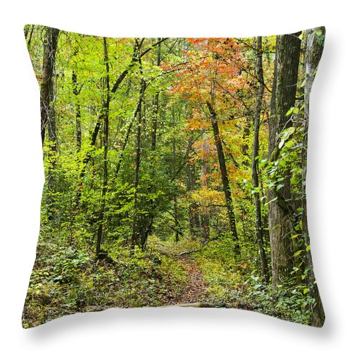 Chatooga Throw Pillow featuring the photograph Chatooga Forest Trail by Barbara Northrup