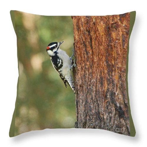 Bird Throw Pillow featuring the photograph Checking It Out by Grace Grogan