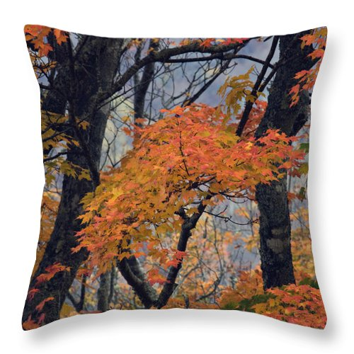 Autumn Throw Pillow featuring the photograph Cherohala Maple - D007676 by Daniel Dempster