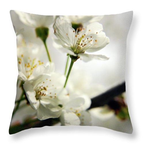 Cherry Blossom Throw Pillow featuring the photograph Cherry Blossom by Vicki Field