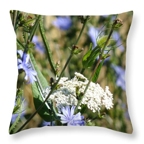 Nature Throw Pillow featuring the photograph Chicory And Lace by Peggy King