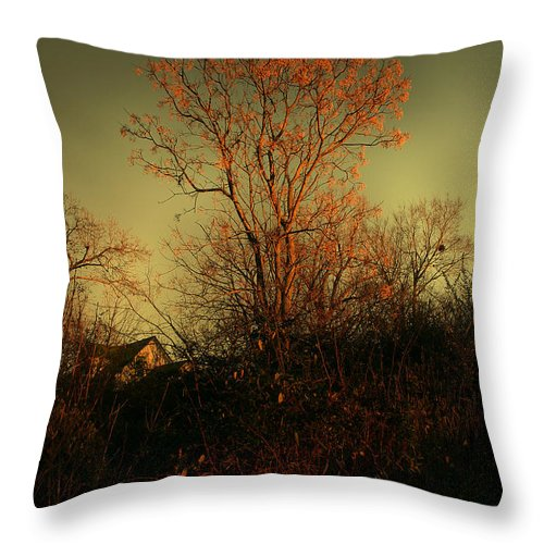 Tree Throw Pillow featuring the photograph Chinaberry At Sunset by Nina Fosdick