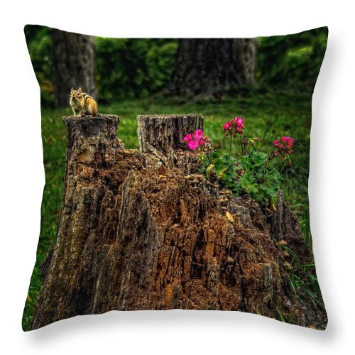 Xdop Throw Pillow featuring the photograph Chip Monk The Chipmunk by John Herzog